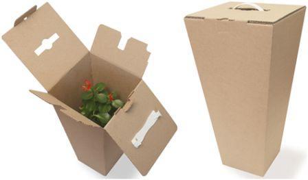 Как подготовить домашние цветы для переезда