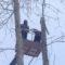 опускание опасных деревьев