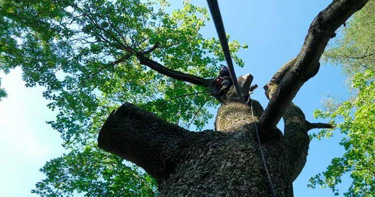 Оhtlike puude langetamine