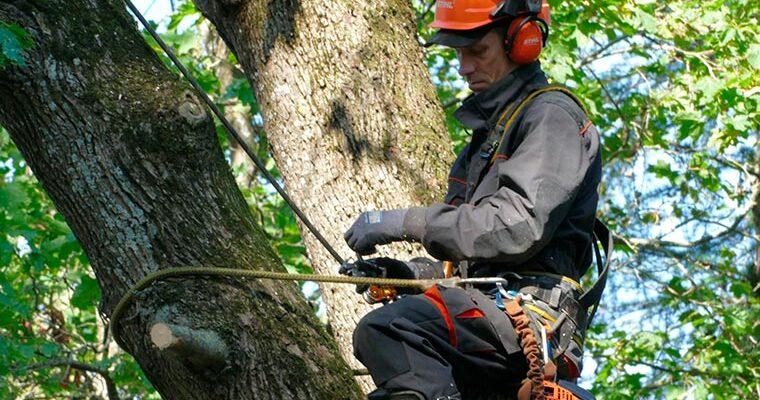 ohtlike puude langetamine